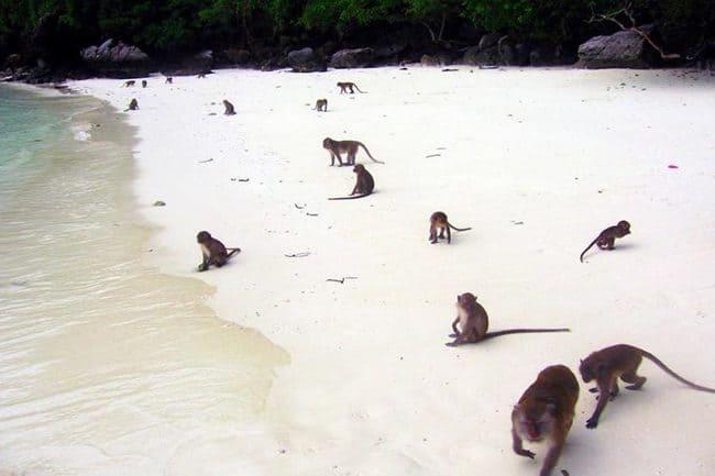 سفر به جزیره کو فی فی