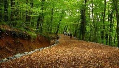 طبیعتی بکر جنگل بلگراد در نزدیکی شهر استانبول