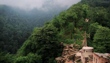 jangal 7 384x220 - معرفی جنگل های ایران به همراه تصویر