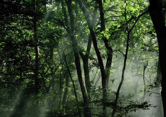 پارک جنگلی سراوان رشت