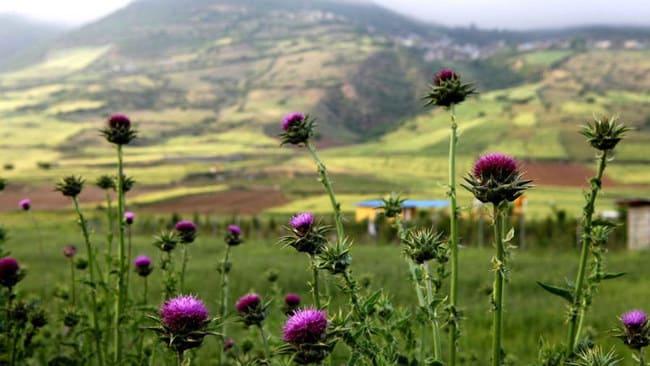 بهترین مکان های شمال ایران برای تابستان - بخش اول