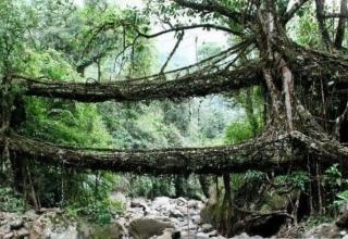 پل های ریشه ای