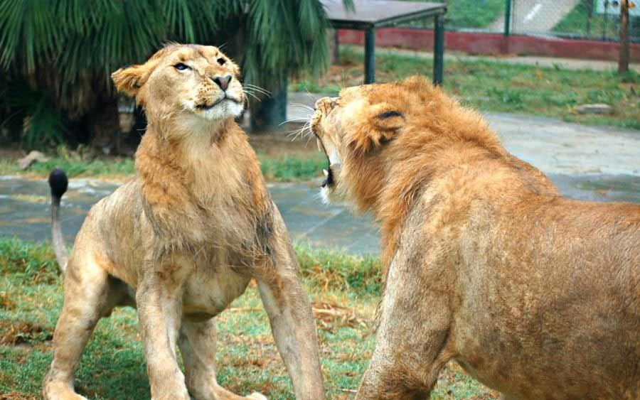 باغ وحش استانبول