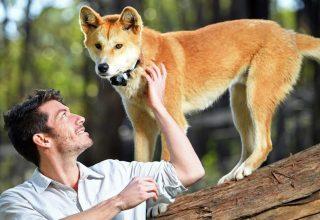 آشنایی با باغ وحش های فوق العاده استرالیا