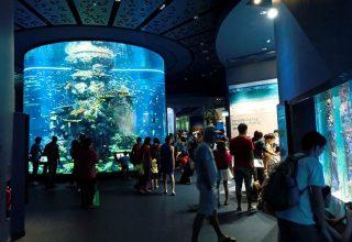 آشنایی با سی آکواریم بزرگ سنگاپور