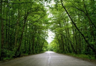 جنگل گیسوم