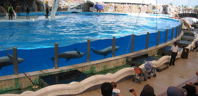 پارک دلفین ها یا دلفیناریوم کیش