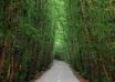 جنگل دالخانی رامسر