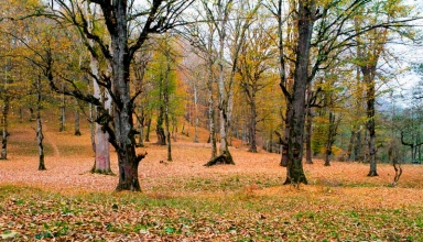 پارک جنگلی صفارود رامسر
