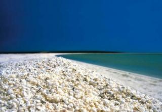 ساحل صدف استرالیا