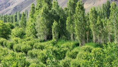 روستای زرین دشت تهران