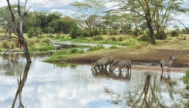 ماسایی مارا کنیا و سرنگتی تانزانیا