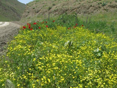 روستای ماجلان خلخال