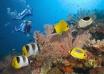 دیواره ی مرجانی بزرگ استرالیا