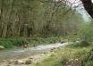 پارک جنگلی فین چالوس