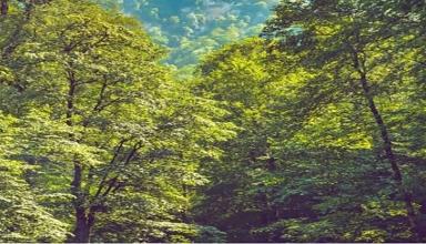 دره شموشک تهران