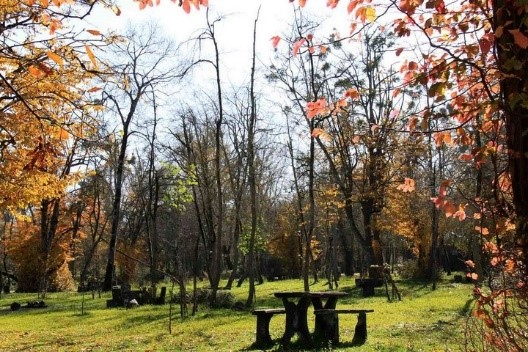 جنگل های بی نظیر در شمال
