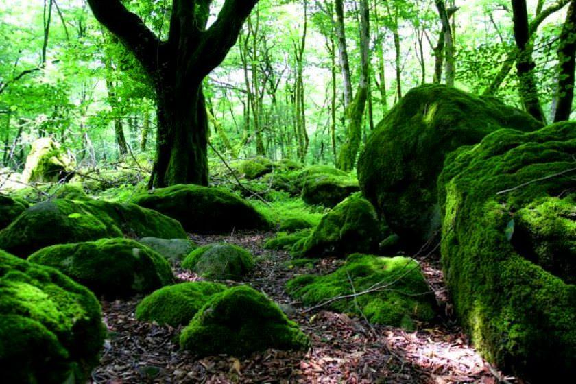 پارک جنگلی چالدره تنکابن