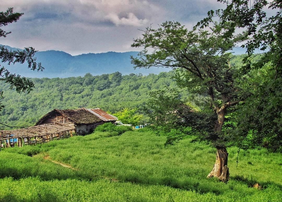 جنگل بلیران آمل