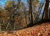 جنگل نیلبرگ رامیان